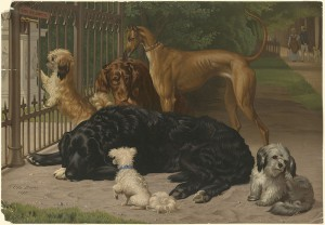 800px-Dogs_Not_Admitted_by_Boston_Public_Library
